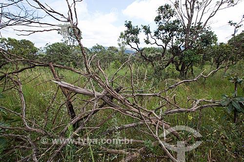 Vegetação típica do cerrado no Parque Estadual dos Pireneus  - Pirenópolis - Goiás (GO) - Brasil