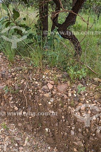 Pedras de quartzito de micáceo no solo do Parque Estadual Serra dos Pireneus  - Pirenópolis - Goiás (GO) - Brasil