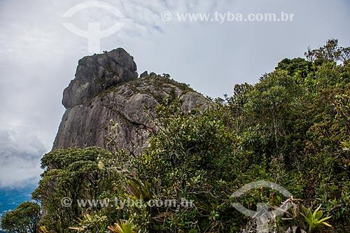 Trilha para o Morro da Cruz - Parque Nacional da Serra dos Órgãos  - Teresópolis - Rio de Janeiro (RJ) - Brasil