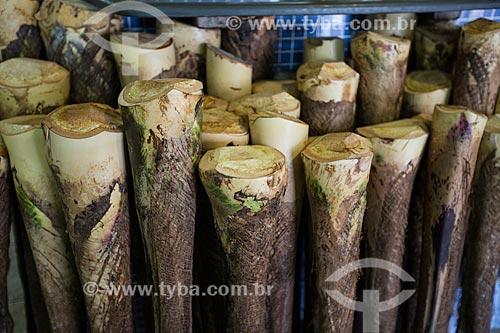 Palmito da guariroba (Syagrus oleracea) à venda no Mercado Municipal Carlos de Pina  - Anápolis - Goiás (GO) - Brasil