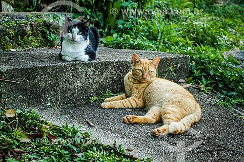Gatos domésticos  - Florianópolis - Santa Catarina (SC) - Brasil