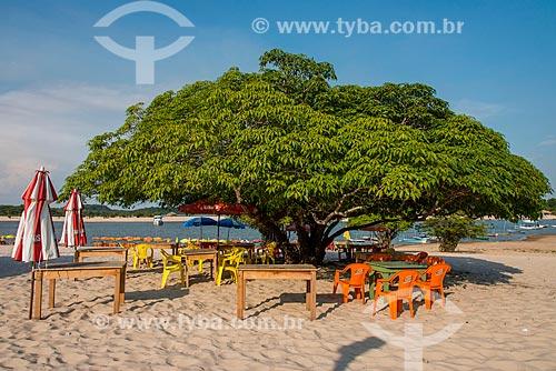Árvore na orla da Praia de Alter-do-Chão  - Santarém - Pará (PA) - Brasil