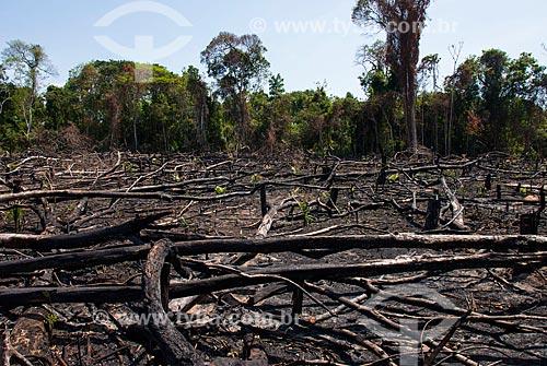 Queimada na Floresta Nacional do Tapajós  - Belterra - Pará (PA) - Brasil