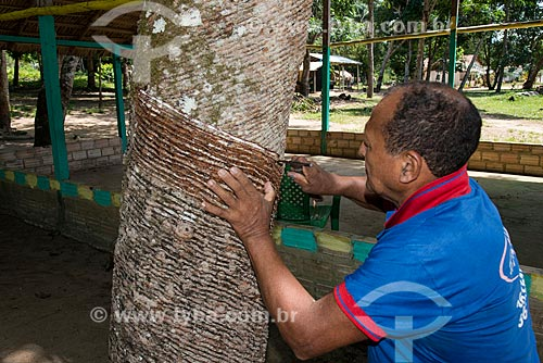 Demonstração da coleta de látex na Comunidade Ribeirinha Maguary - ribeirinhos que viviam da extração do látex - na Floresta Nacional do Tapajós  - Belterra - Pará (PA) - Brasil