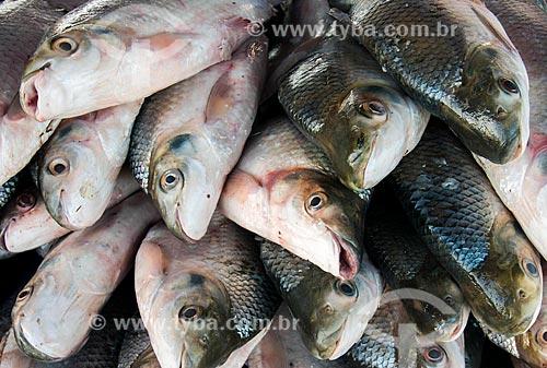 Detalhe de curimbatás (Prochilodus lineatus) à venda no Mercado de Peixes da cidade de Santarém  - Santarém - Pará (PA) - Brasil