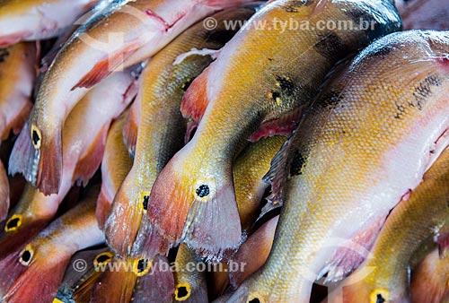 Detalhe de tucunarés (Cichla ocellaris) à venda no Mercado de Peixes da cidade de Santarém  - Santarém - Pará (PA) - Brasil