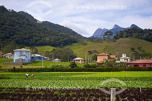 Plantação de hortaliças na cidade de Teresópolis  - Teresopolis - Rio de Janeiro - Brazil