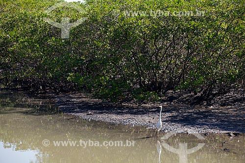 Manguezal na Reserva Biológica Estadual de Guaratiba  - Rio de Janeiro - Rio de Janeiro (RJ) - Brasil