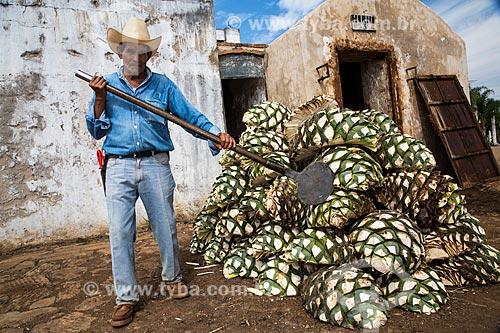 Cortador de agave-azul (Agave tequilana) - matéria-prima para a produção da tequila  - Tequila - Jalisco - México