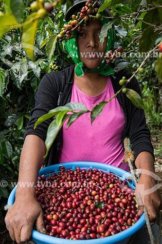 Mulher colhendo café  - Antigua Guatemala - Departamento de El Quiché - República de Guatemala