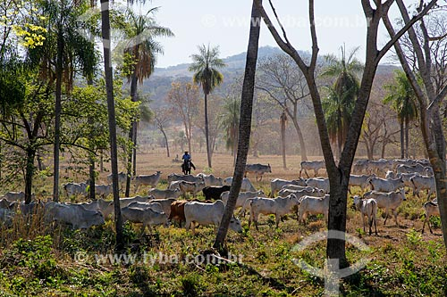 Fazenda de gado no Pantanal Matogrossense  - Miranda - Mato Grosso do Sul (MS) - Brasil