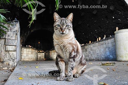 Gato no cruzeiro  da Paróquia São Judas Tadeu  - Rio de Janeiro - Rio de Janeiro (RJ) - Brasil