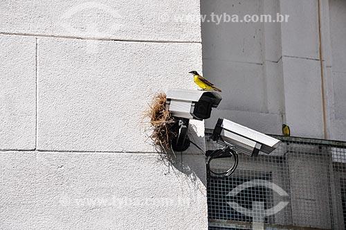 Ninho de cambacica (Coereba flaveola) - também conhecido como sebinho, sebito ou caga-sebo - sob a câmera de segurança da Paróquia São Judas Tadeu  - Rio de Janeiro - Rio de Janeiro (RJ) - Brasil