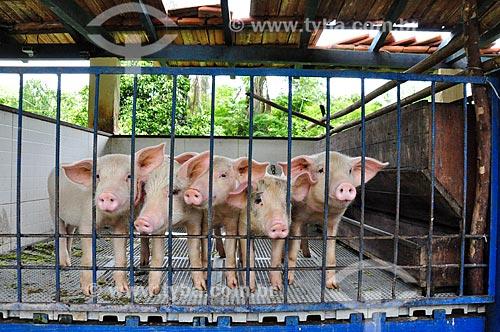 Curral com porcos no Paraíba do Sul Hotel Fazenda  - Paraíba do Sul - Rio de Janeiro (RJ) - Brasil