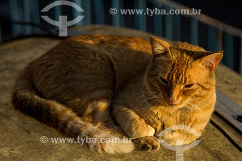 Gato no mirante do Trono de Fátima  - Petrópolis - Rio de Janeiro (RJ) - Brasil