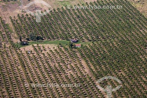 Plantação de côco  - Rio de Janeiro - Rio de Janeiro (RJ) - Brasil