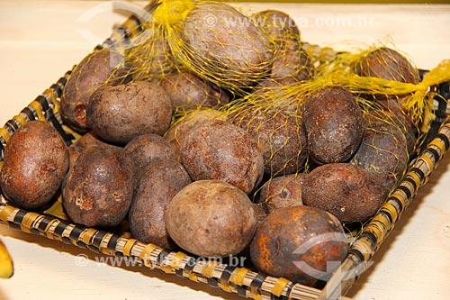 Detalhe do fruto do uxi (Endopleura uchi)  - Parintins - Amazonas (AM) - Brasil