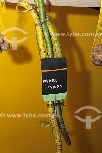 Detalhe do fruto do Mari (Geoffroea spinosa) - também conhecido com umari  - Parintins - Amazonas (AM) - Brasil