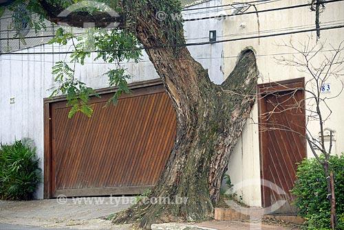 Muro de casa com abertura para evitar corte de árvore  - São Paulo - São Paulo (SP) - Brasil