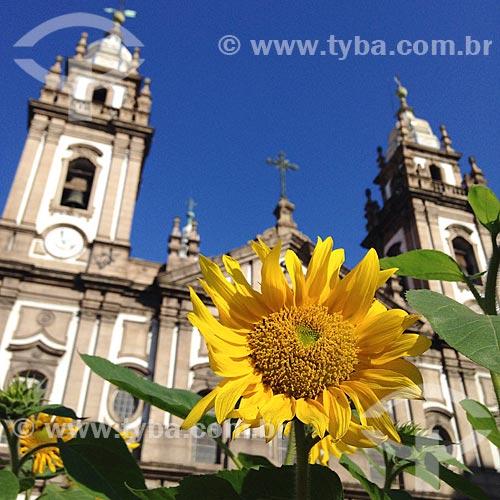 Girassol (Helianthus annuus) na Praça Pio X com a Igreja de Nossa Senhora da Candelária (1609) ao fundo  - Rio de Janeiro - Rio de Janeiro (RJ) - Brasil