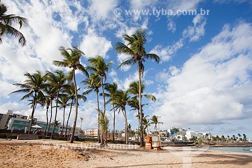 Coqueiros na orla da Praia de Ondina  - Salvador - Bahia (BA) - Brasil