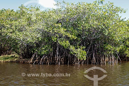 Área de manguezal no Rio Timeantube  - Mata de São João - Bahia (BA) - Brasil