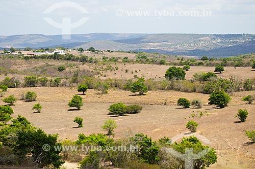 Paisagem de caatinga no Planalto da Borborema  - Solânea - Paraíba (PB) - Brasil