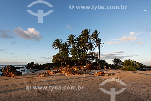 Coqueiros na Ilha da Saudade  - Cairu - Bahia (BA) - Brasil