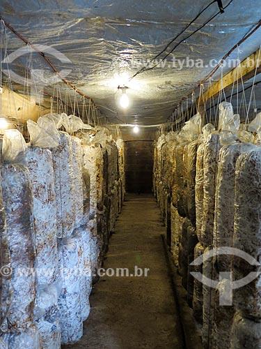 Cultivo de cogumelo  - Gramado - Rio Grande do Sul (RS) - Brasil