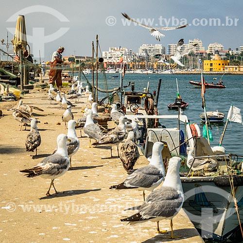 Gaivotas no porto da freguesia de Ferragudo  - Concelho de Lagoa - Distrito de Faro - Portugal