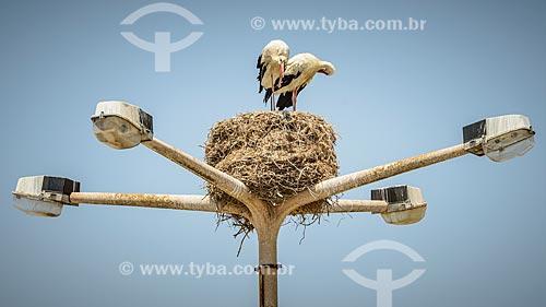 Ninho de cegonha-branca (Ciconia ciconia) no topo de um poste  - Faro - Distrito de Faro - Portugal