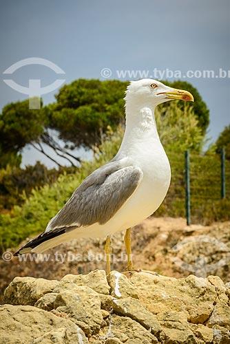 Detalhe de gaivota na Praia dos Três Irmãos  - Concelho de Portimão - Distrito de Faro - Portugal