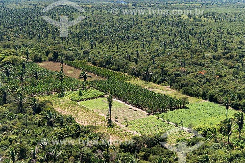 Foto aérea de plantação de banana e mandioca em área de Mata dos Cocais  - Teresina - Piauí (PI) - Brasil