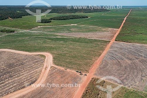 Foto aérea de plantação de cana-de-açúcar próximo à área de Mata dos Cocais  - Teresina - Piauí (PI) - Brasil