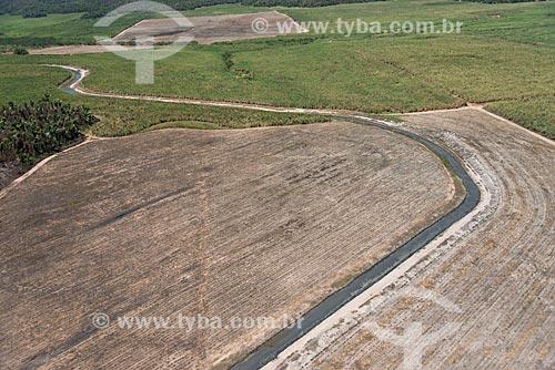 Foto aérea de plantação de cana-de-açúcar próximo à área de Mata dos Cocais - irrigação do Rio Parnaíba  - Teresina - Piauí (PI) - Brasil