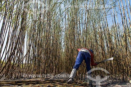Boia-fria durante a colheita da cana-de-açúcar  - Teresina - Piauí (PI) - Brasil