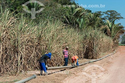 Trabalhadores rurais colocando dutos de irrigação da plantação de cana-de-açúcar  - Teresina - Piauí (PI) - Brasil