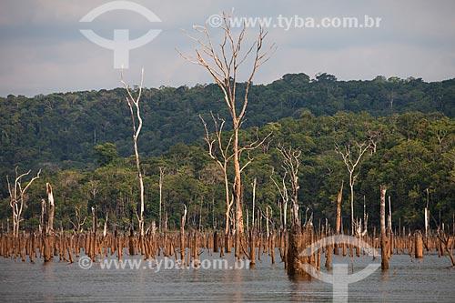 Troncos de árvores que antes estavam submersas pelo lago da Usina Hidrelétrica de Balbina  - Presidente Figueiredo - Amazonas (AM) - Brasil