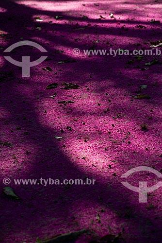 Detalhe de chão coberto por flores de Jambo no Parque Nacional da Tijuca  - Rio de Janeiro - Rio de Janeiro (RJ) - Brasil