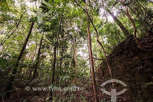 Ruínas do Sítio Humaitá - antiga casa do Barão do Bom Retiro no século XIX - no Parque Nacional da Tijuca  - Rio de Janeiro - Rio de Janeiro (RJ) - Brasil