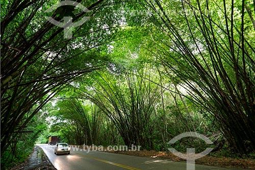 Trecho de estrada na Reserva Biológica de Saltinho  - Tamandaré - Pernambuco (PE) - Brasil