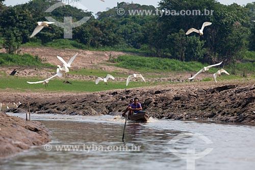 Lancha com ribeirinhos no Rio Amazonas com garças-branca-grande (Ardea alba) voando  - Manaus - Amazonas (AM) - Brasil