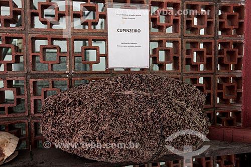 Cupinzeiro em exibição na Sub-sede do Piraquara - Parque Estadual da Pedra Branca  - Rio de Janeiro - Rio de Janeiro (RJ) - Brasil