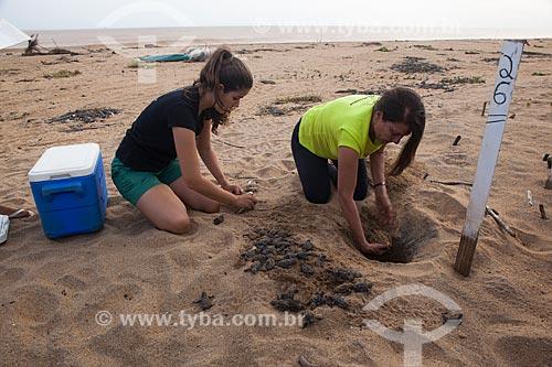 Voluntários do Projeto TAMAR transportando filhotes de tartaruga marinha para área longe da lama após rompimento da barragem de rejeitos de mineração da empresa Samarco em Mariana (MG)  - Linhares - Espírito Santo (ES) - Brasil