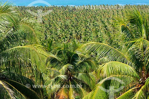 Vista do Mirante do Gunga  - Roteiro - Alagoas (AL) - Brasil