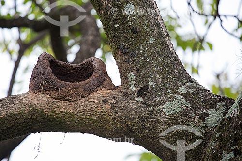 Ninho de João-de-barro (Furnarius rufus) - também conhecido como Forneiro - na Praça Bagatelle  - Belo Horizonte - Minas Gerais (MG) - Brasil
