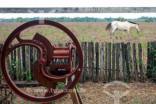 Cavalo na Fazenda do Carmo  - Salvaterra - Pará (PA) - Brasil