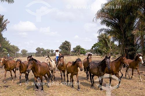Cavalos no curral da Fazenda Sanjo  - Salvaterra - Pará (PA) - Brasil