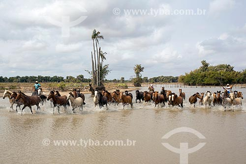 Cavalos no açude próximo à Fazenda Sanjo  - Salvaterra - Pará (PA) - Brasil