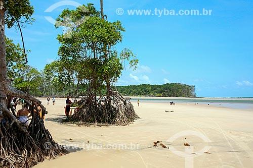 Árvores na orla da Praia de Barra Velha  - Soure - Pará (PA) - Brasil